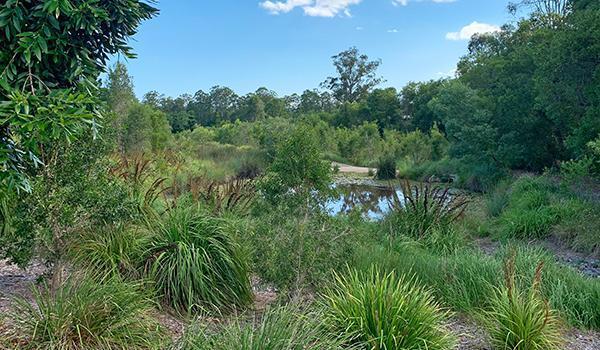 Wetland Construction & Restoration