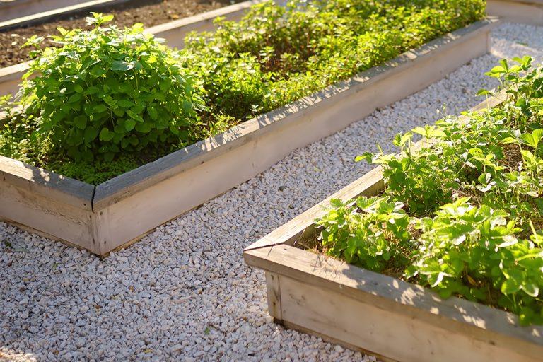 Location of your vegetable garden