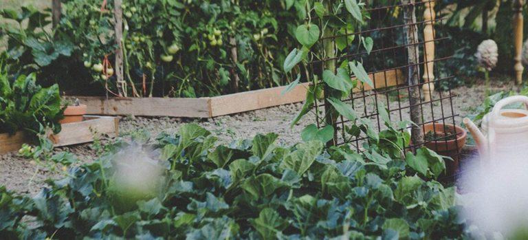 Vegetable Garden Set Up