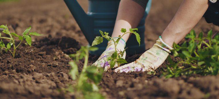Green thumbs planting seedling