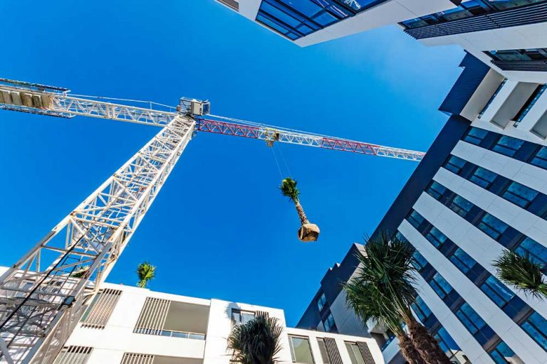Park Sydney palm trees craned into place
