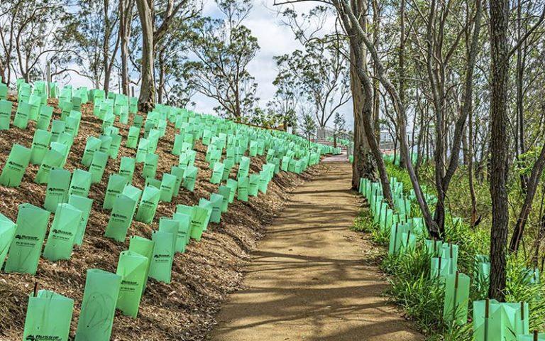 Tobruk Memorial Lookout Planting