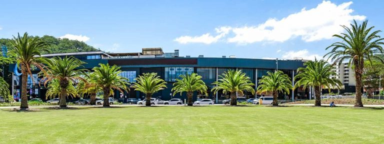 Leagues Club Park Gosford Lawn & Transplanted palms